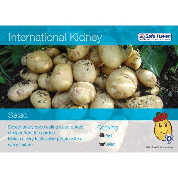 Seed Potatoes International Kidney - x5