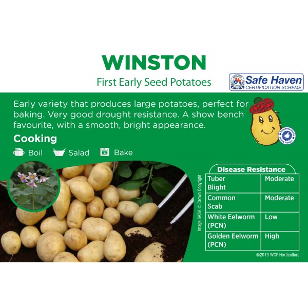Seed Potatoes - FIRST EARLY - Winston x5