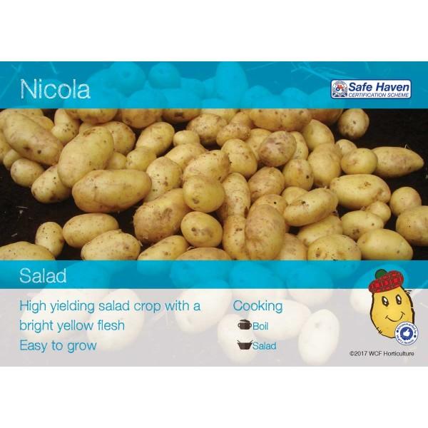 Seed Potatoes - Salad Nicola x5