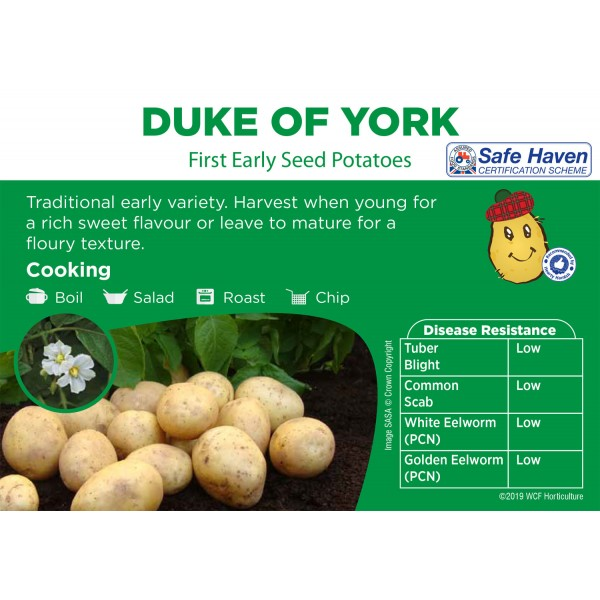 Seed Potatoes - First EARLY - Duke of York x5