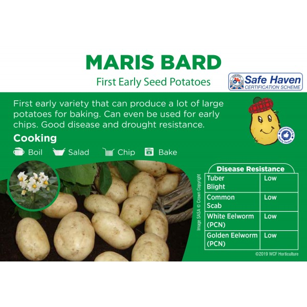 Seed Potatoes - FIRST EARLY -  Maris Bard - x5