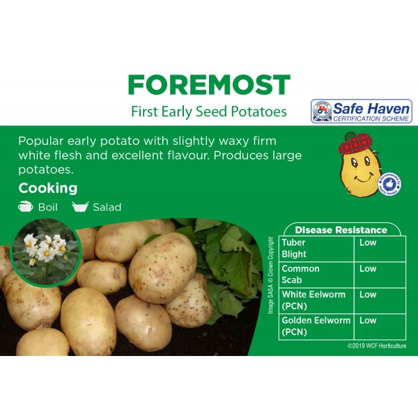 Seed Potatoes - FIRST EARLY -  Foremost - x5
