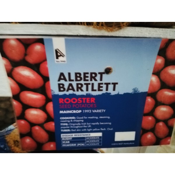 Premium Seed Potatoes Rooster - x5