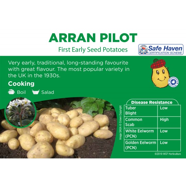 Seed Potatoes - FIRST EARLY -  Arran Pilot x5