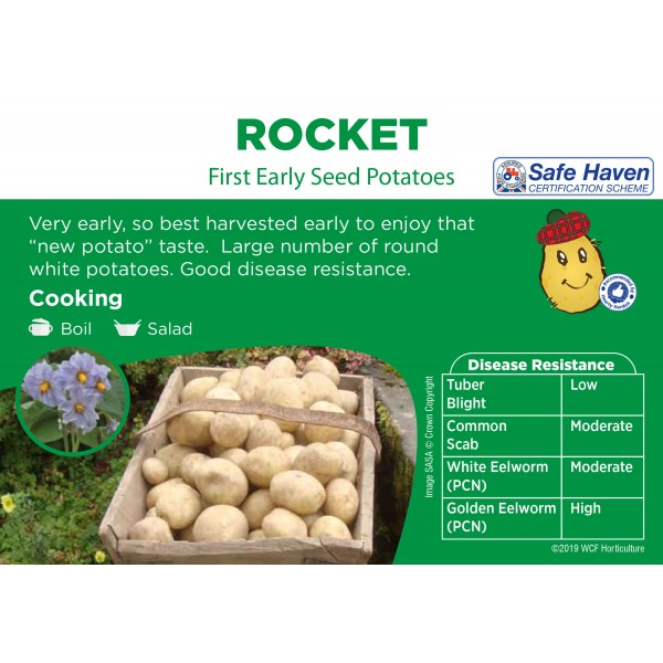 Seed Potatoes - FIRST EARLY -  Rocket x5