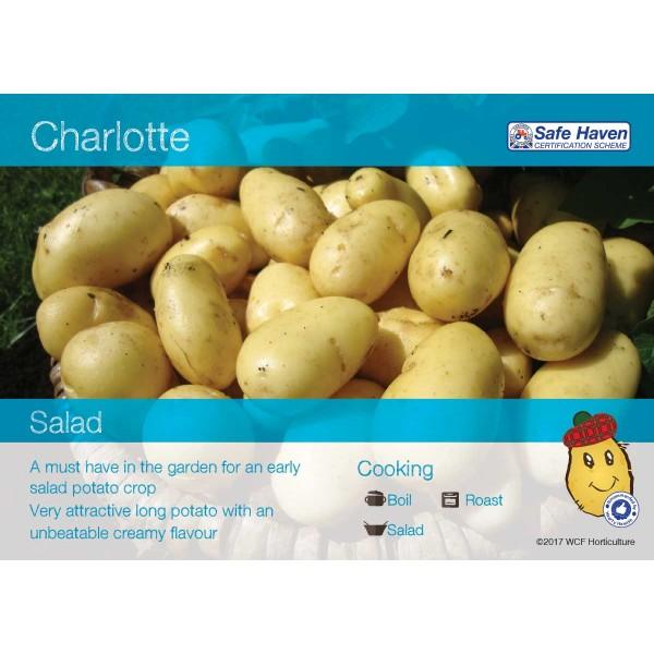 Seed Potatoes - Salad Charlotte x5