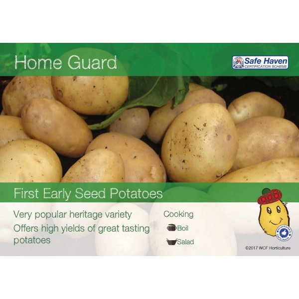 Seed Potatoes - FIRST EARLY - Home Guard x5