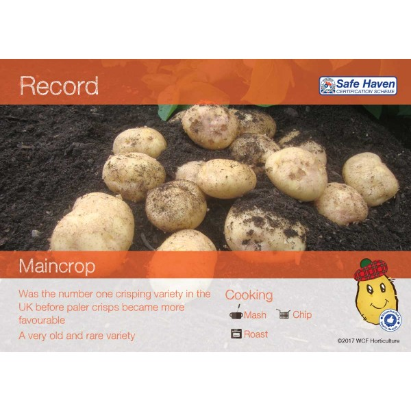Seed Potatoes - MAINCROP - Record x5