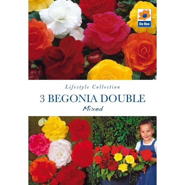 De Ree begonia Double mxd
